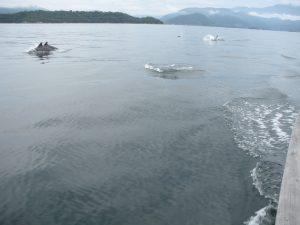 0271-porpoise-best
