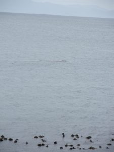 SA2359 Whale 4