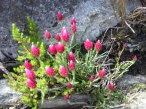 SA2627 Red Flowers