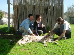 SA2688 Rocky & Julie with Cheetah