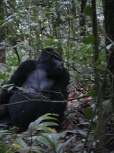 Uganda 113a Blackback