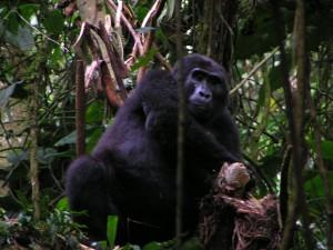 Uganda 113c Blackback